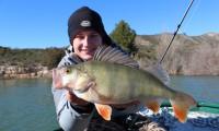 christopher görg barschfischen am ebro in mequinenza bei taffi tackle tours