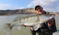 zanderfischen am ebro mit taffi tackle tours in mequinenza
