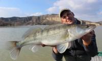 zanderfischen am ebro mit taffi tackle tours in mequinenza