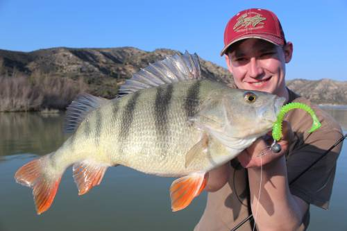 barsch angeln mit christopher görg in spanien bei taffi tackle tours