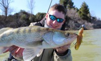 christopher görg zanderfischen am ebro mit anbieter taffi tackle tours aus mequinenza