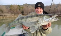 zander angeln am ebro mit taffi tackle tours