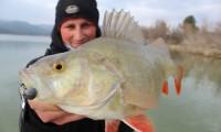 barsch angeln am ebro beim anbieter taffi tackle tours