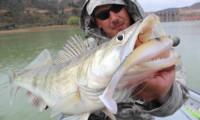 zanderfischen am ebro mit anbieter taffi tackle tours aus mequinenza