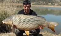 karpfenfischen in spanien im angelcamp mequinenza bei taffi tackle tours