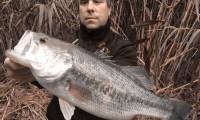 schwarzbarsch angeln am ebro im angelcamp von taffi tackle tours