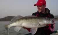 zanderfischen in spanien am segre im angelcamp taffi tackle tours