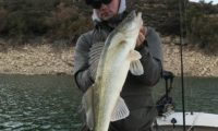 vertikal zander am oberen stausee in caspe bei taffi tackle tours