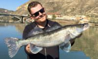 mequinenza zander am ebro bei taffi tackle tours