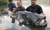 monsterwels aus spanien gefangen am segre von taffi tackle tours