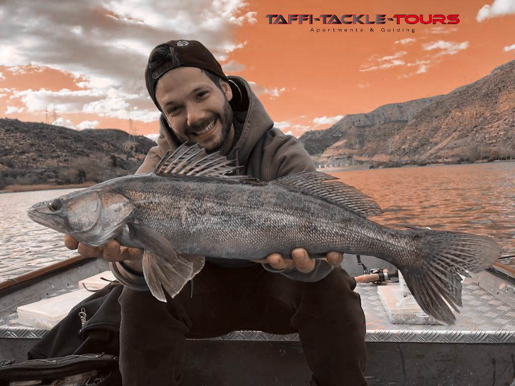 zanderangeln in mequinenza bei taffi tackle tours