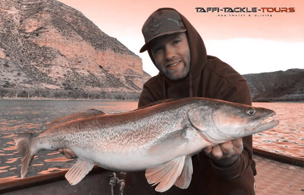 zanderangeln am ebro mit taffi tackle tours