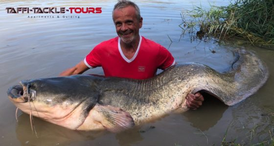 wallerangeln in spanien am segre bei taffi tackle tours