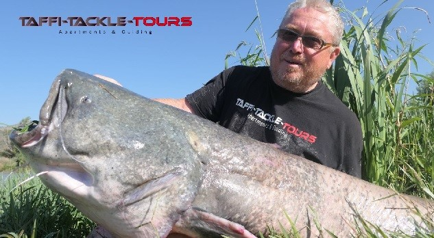 extreme wallerguiding bei taffi tackle tours in mequinenza spanien