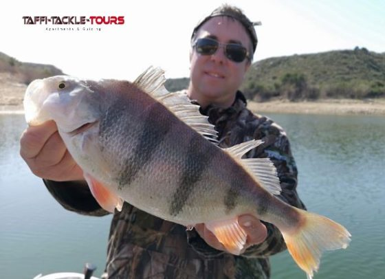 Barschangeln in spanien am ebro mit dem reiseanbieter taffi tackle tours