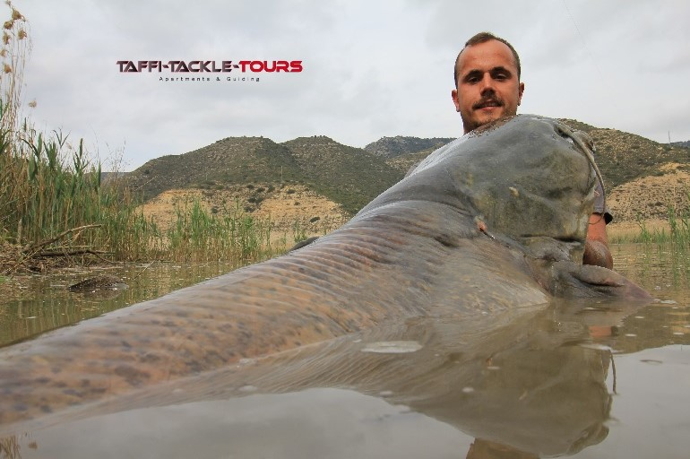 welsangeln in mequinenza im welscamp bei taffi tackle tours