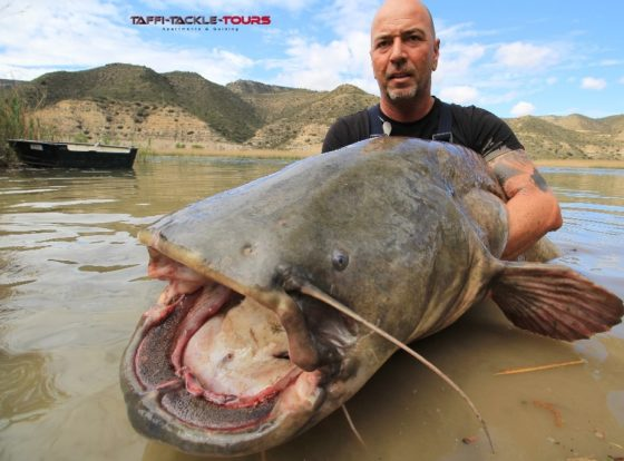 welsangeln in spanien am ebro im wallercamp von taffi tackle tours in mequinenza