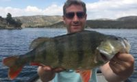 barschangeln in spanien am ebro im angelcamp von taffi tackle tours