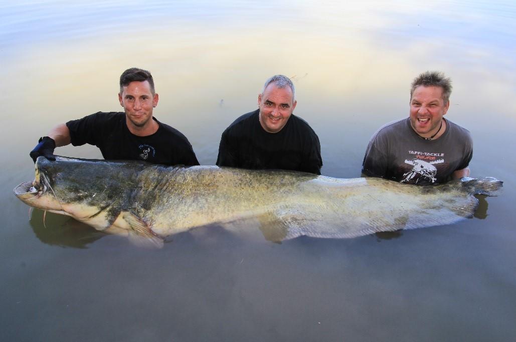 monsterfisch beim vollguiding bei taffi tackle tours