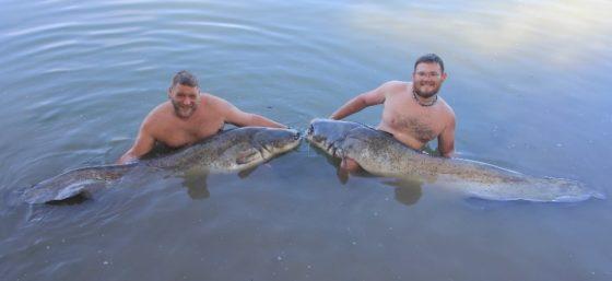erfolgreiches vollguiding mit vielen 2m fischen bei taffi tackle tours