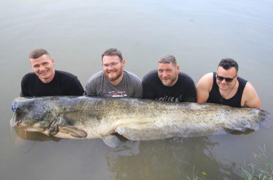 extrem vollguiding mit monsterfisch im welscamp von taffi tackle tours